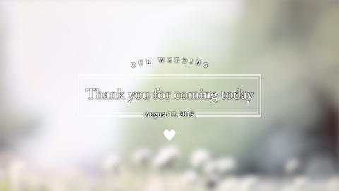 【Sunny Day】オープニングムービー